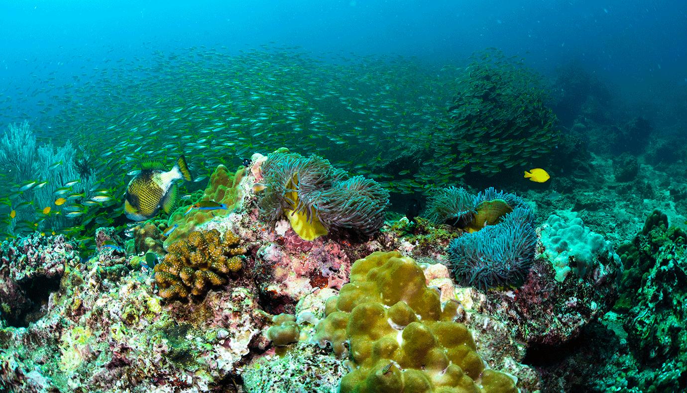 banc de poissons colorés en plongé sous marine
