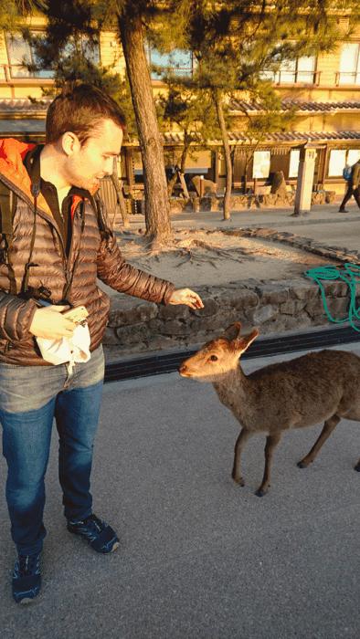 romain et une biche à Miyajima au japon