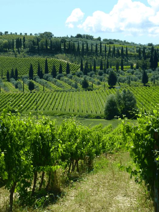 vue sur la vigne et les cyprès en toscane