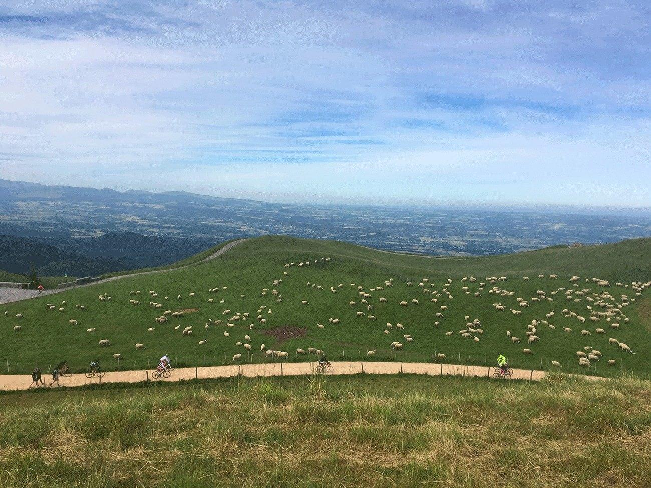 moutons et vélo pour la Montée du Puy de Dôme