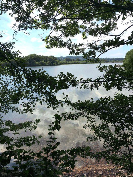 lac de villefranche de pana avec arbre lors de sortie VTTAE