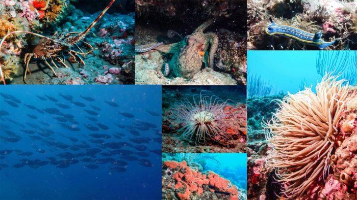 photos plongée proche de Montpellier palavas réserve marine
