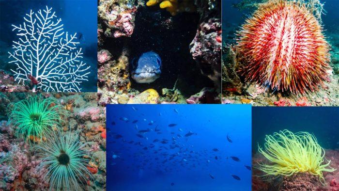 photos plongée palavas réserve marine