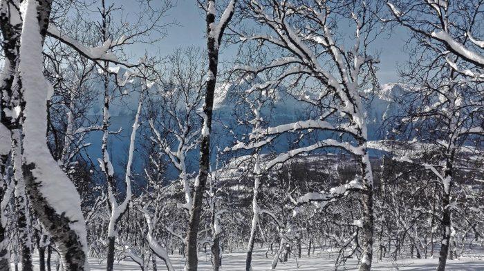 arbre avec neige norvège