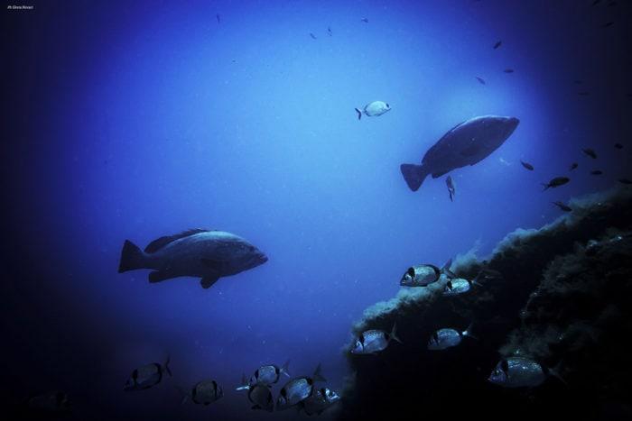 gros poissons réserve marine portofino en plongée