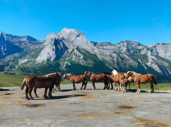 chevaux col aubisque