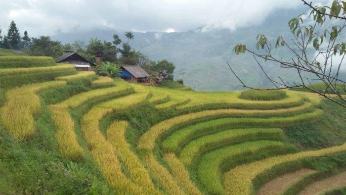 rizières sapa en terrasse