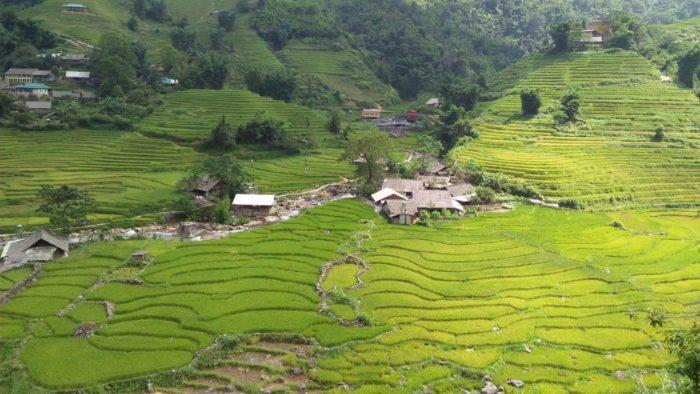 sapa rizières vertes terrasses