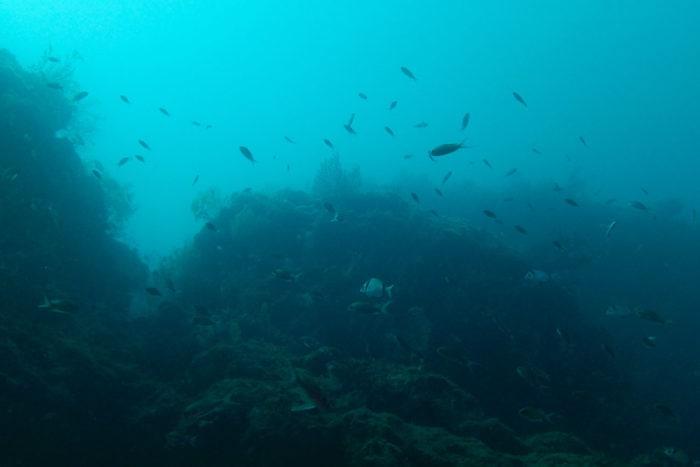 poisson frioul plongee tiboulen