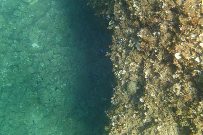 snorkeling crique frioul